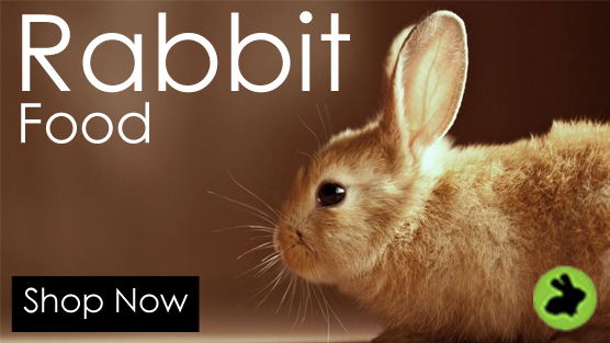 rabbit - Privacy Policy